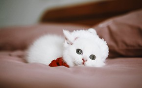 Picture cat, white, look, kitty, sofa, baby, lies, cap
