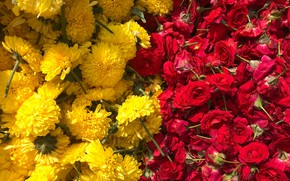 Picture flowers, roses, yellow, red, chrysanthemum, a lot