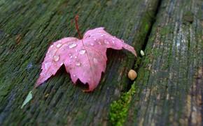 Picture Board, bone, grape leaf, drops