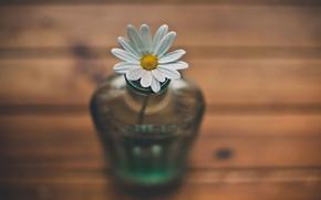 Picture flower, nature, style, macro, landscape