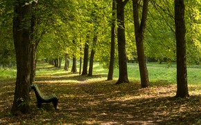 Picture Park, alley, bench, sunlight