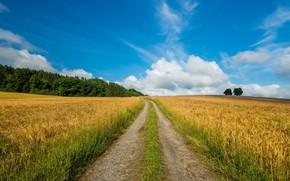 Picture wheat, field, landscape, nature, beauty, path