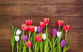 Picture flowers, colorful, tulips, red, white, fresh, wood, flowers, tulips, spring, purple, multicolored