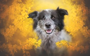 Wallpaper language, look, face, flowers, branches, portrait, dog, blur, spring, yellow, garden, grey, flowers, flowering, yellow ...