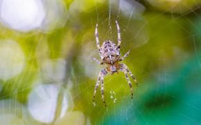 Picture greens, summer, macro, web, spider, spider
