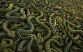 Picture snakes, texture, digital art, 3D art