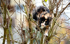 Picture cat, look, face, branches, nature, pose, tree, bokeh, spotted, motley