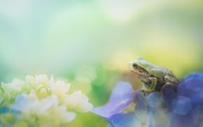 Picture macro, flowers, frog, bokeh, blurred background, hydrangea