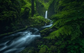 Picture green, forest, Nature, river