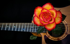 Picture rose, guitar, strings