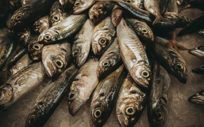 Picture fish, background, food
