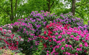 Picture trees, flowers, Park, the bushes, rhododendrons