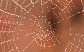 Wallpaper macro, web, water drops
