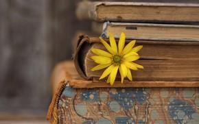 Wallpaper flower, background, books