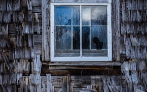 Picture roof, house, window, naturalism