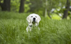 Picture grass, nature, each, dog