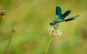 Picture macro, background, plant, dragonfly, stem