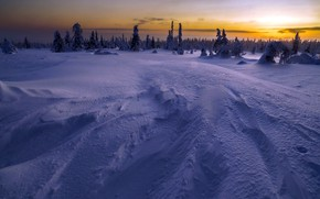 Picture winter, forest, snow, sunset