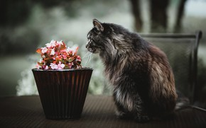 Picture cat, flowers, street