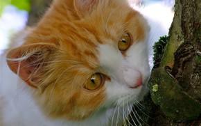 Wallpaper cat, cat, tree, muzzle, cat