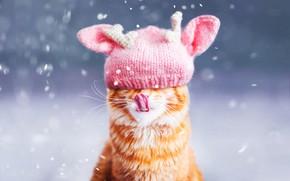 Picture winter, language, cat, cat, face, snow, background, pink, hat, portrait, red, snowfall, ears, cap, bokeh, …