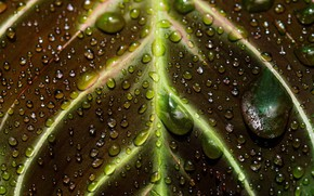 Picture water, drops, macro, leaf, veins