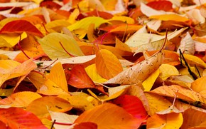 Picture autumn, leaves, yellow, falling leaves, a lot, the pile of leaves, autumn leaves