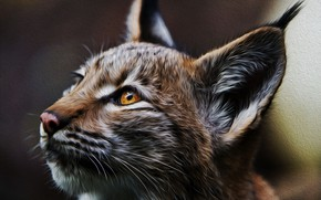 Picture portrait, predator, Lynx