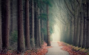 Picture road, autumn, forest, branches, fog, Park, trunks, alley, path