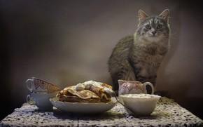 Picture cat, table, animal, kettle, Cup, still life, pancakes, napkin, sour cream, Kovaleva Svetlana, Svetlana Kovaleva