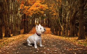 Picture road, autumn, each, dog