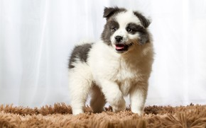 Picture white, look, pose, dog, baby, cute, puppy, curtains, fur, Mat, curtains, face, light background, spotted