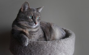 Picture Cat, Animal, Nursling