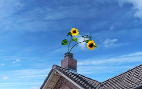 Picture roof, summer, sunflowers, flowers, house, blue, rendering, yellow, pipe, a couple, Duo, two, tile, blue …