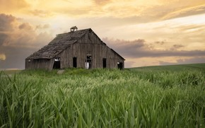 Picture field, grass, house