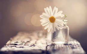Picture flower, background, Bank