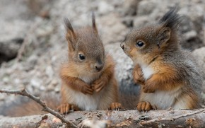 Picture a couple, proteins, cubs, squirrels