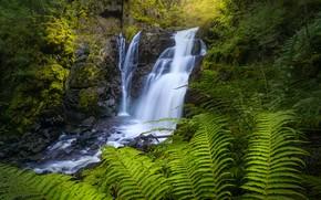 Picture waterfall, Norway, fern, cascade, Norway, Lier, Lier