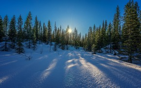 Picture winter, the sun, snow, trees, winter is coming