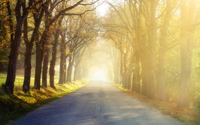 Picture road, trees, nature, morning