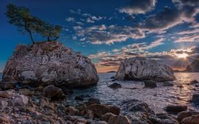 Picture sea, trees, stones, rocks