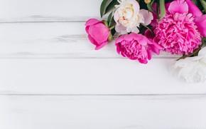 Wallpaper flowers, pink, white, white, wood, pink, flowers, peonies, peonies