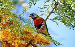 Picture flowers, tree, parrot