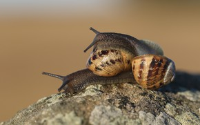 Picture love, pose, background, stone, two, snails, pair, a couple, Duo, relationship, sex, two snails