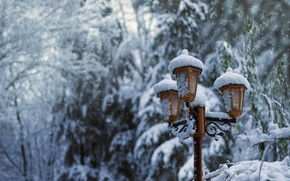 Picture winter, snow, trees, nature, Park, tree, lantern, park, winter, snow, lantern, fir tree
