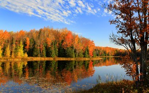 Picture forest, lake, photo