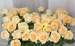 Picture flowers, roses, yellow, yellow, flowers, roses