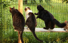 Picture bench, cats, the fence, look