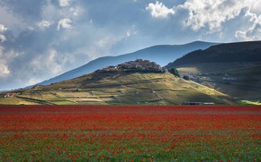 Picture flowers, mountains, hills, Maki, meadow, Italy, settlement, Tuscany, province, poppy field