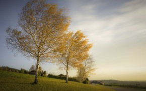 Picture autumn, trees, birch